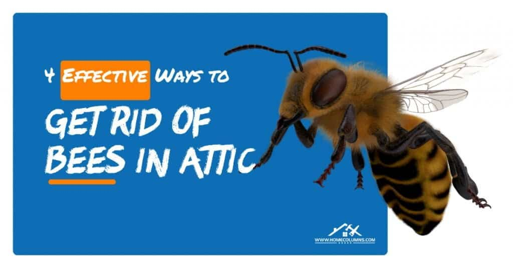 How to get rid of bees in attic