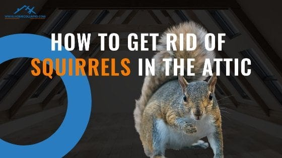 How to get rid of squirrels in attic Feature