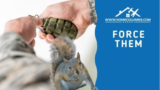 how to get squirrels out of attic using immense force