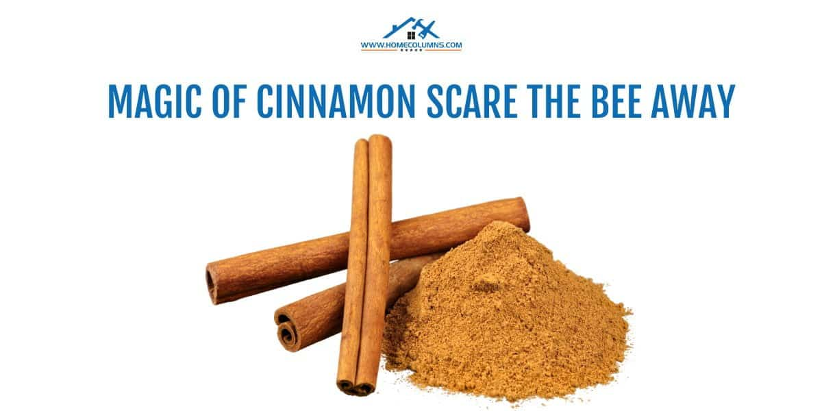 how to get a bee out of your house using cinnamon