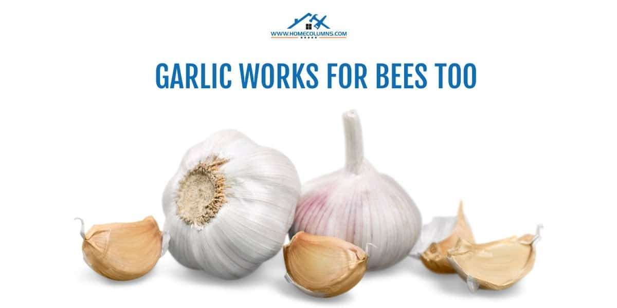 how to get a bee out of your house using garlic powder