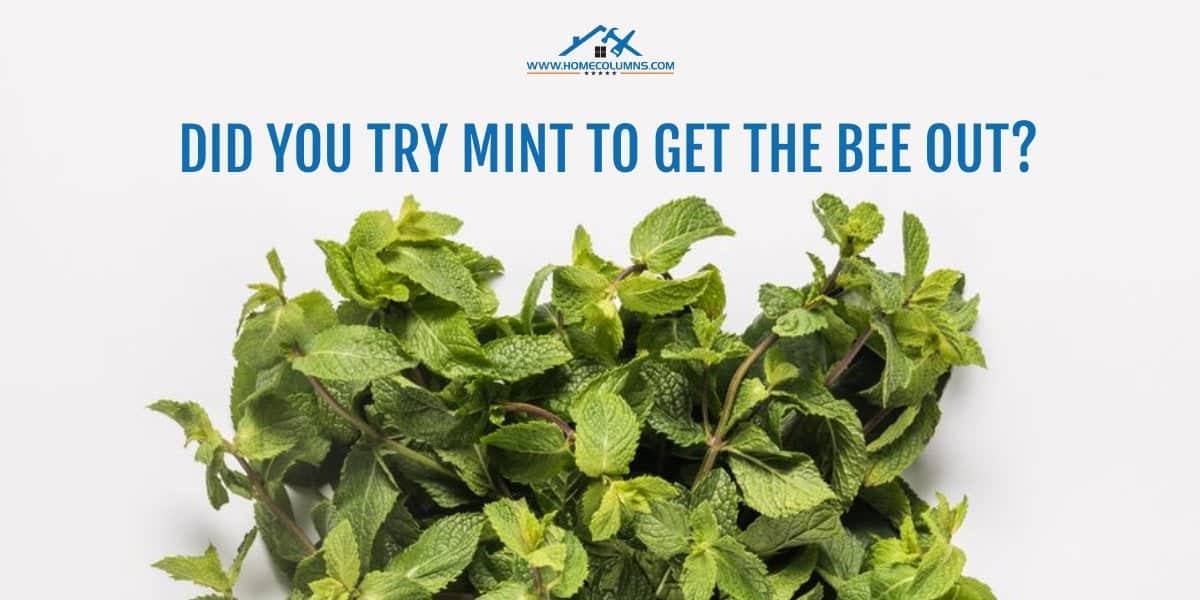 how to get a bee out of your house using mint