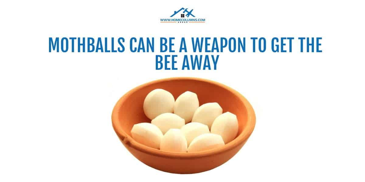 how to get a bee out of your house using mothballs