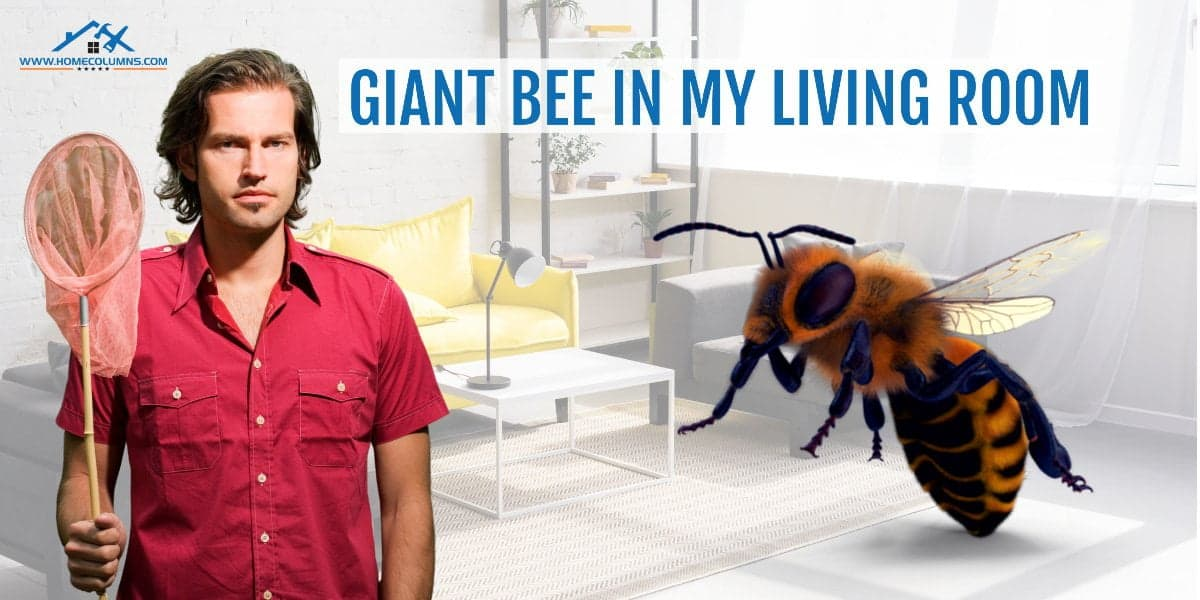 how to get a bee out of your house
