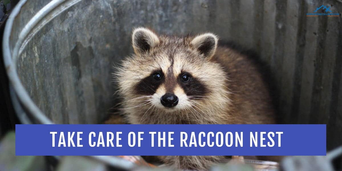Step 2 do it yourself get rid of raccoon in attic
