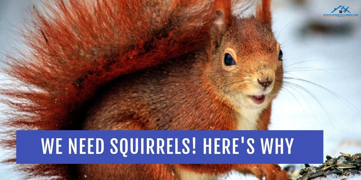 are squirrels good for anything