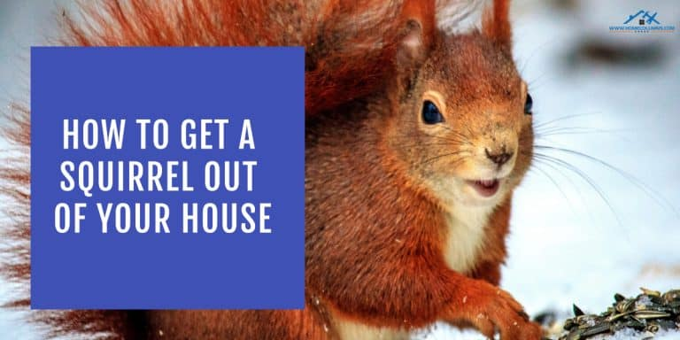 how to get a squirrel out of your house