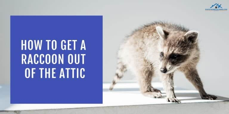 how to get rid of raccoon in attic