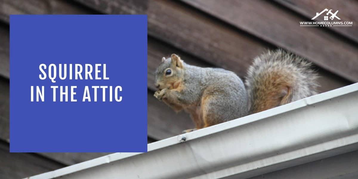 squirrel damage to house attic